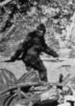 Bigfoot_1